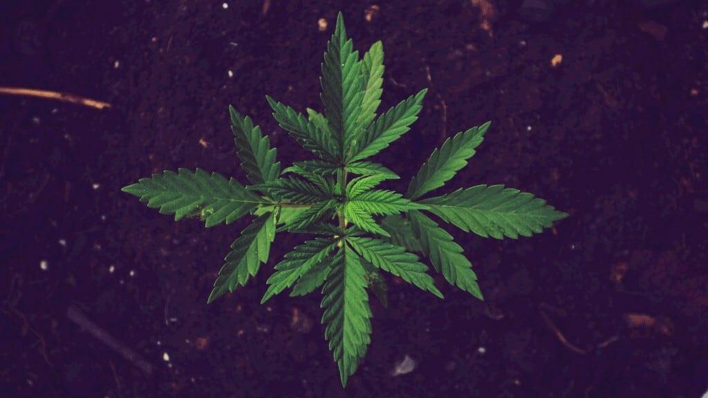 marijuana-salem-massachusetts-dispensary